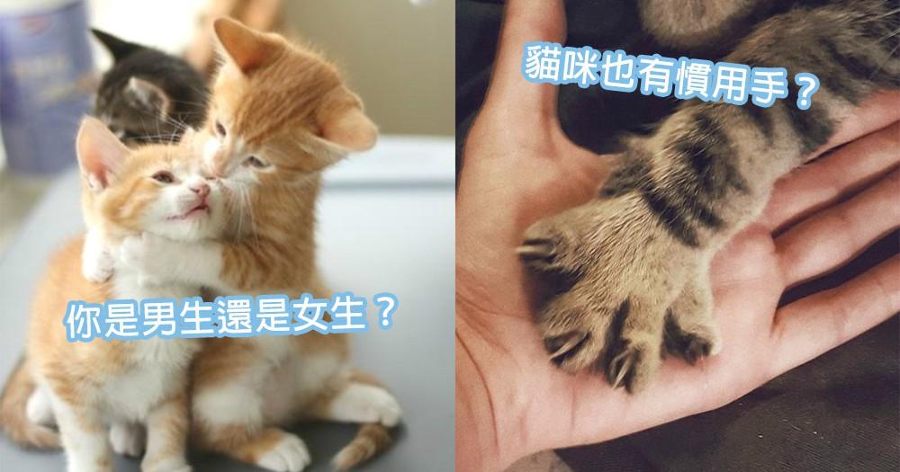 貓咪冷知識!貓咪的慣用手可以分別性別,你家貓咪準不準?
