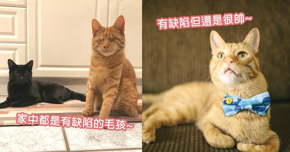 殘疾並不是負擔~半癱瘓橘貓徹夜守候奴才打瞌睡,缺陷貓咪也是最甜心的孩子~