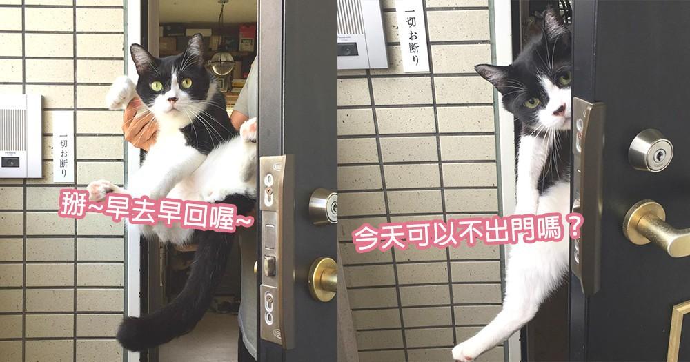 人家也不願早起唷!貓咪每天暖心送奴才出門上班,表情變化太明顯笑翻奴才!
