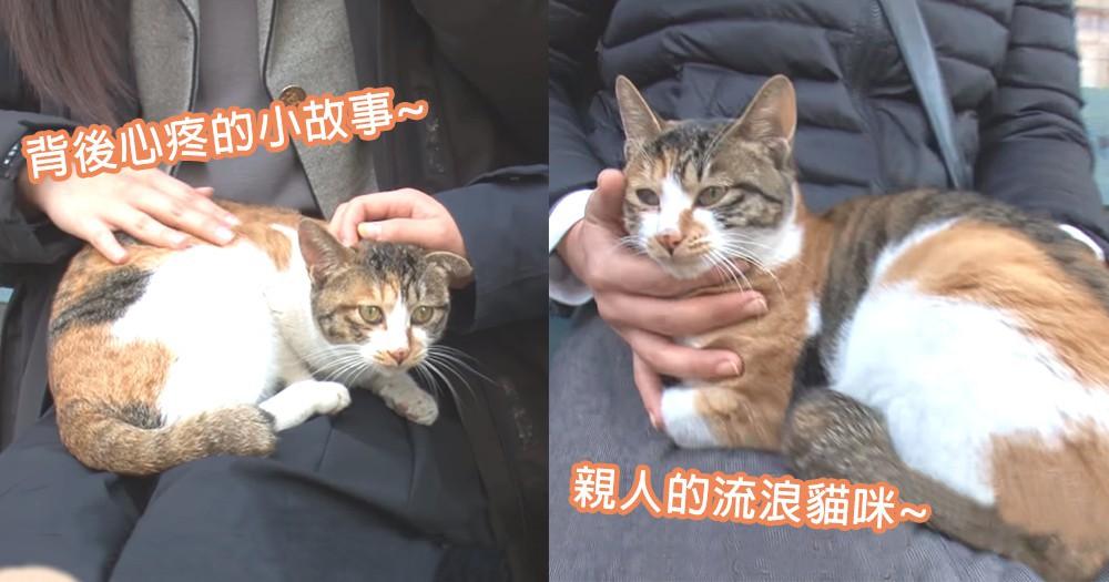 愛撒嬌的流浪貓咪~韓國親人貓咪背後心酸小故事,老闆娘就是貓咪的救命恩人~