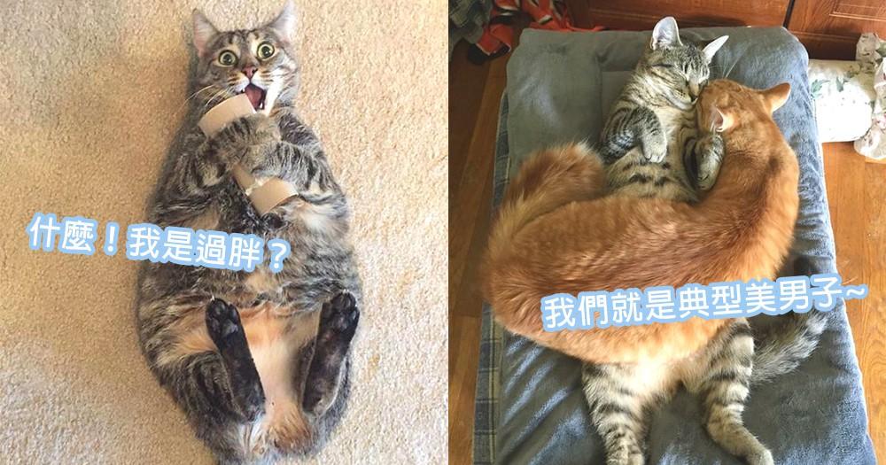 標準美男還是過胖富豪?教你一眼看出貓星人體型,瘦子胖子也逃不出你的法眼!