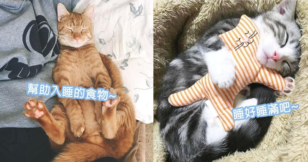 貓星人睡不好讓人好擔憂!4種毛孩們失眠時的食物好伙伴,讓主子們睡好睡滿~