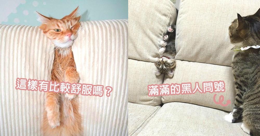 被沙發怪獸吃掉了嗎?7位硬塞沙發玩躲貓貓的貓星人,犯蠢又賣萌的樣子太可愛了~