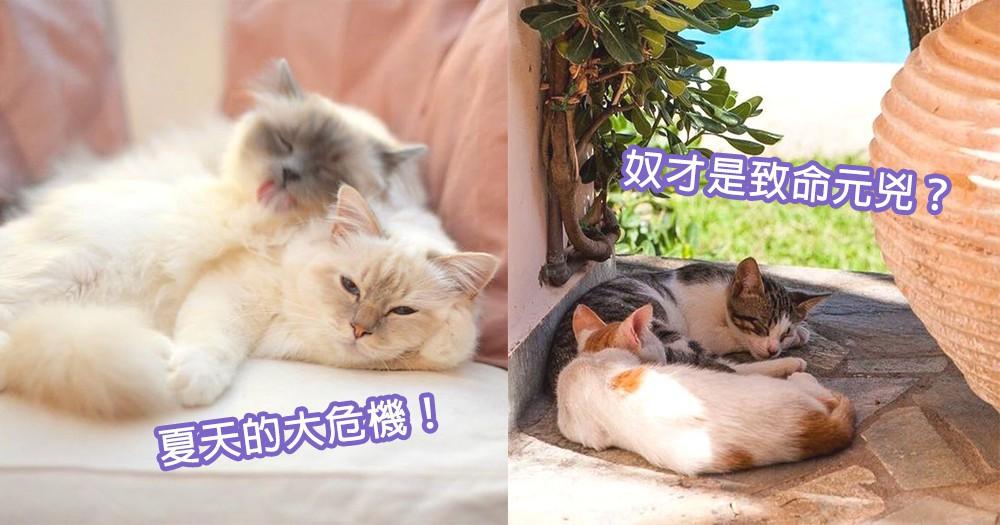 夏天也暗藏致命危機!貓星人慢性中暑3大症狀,奴才們不要成為致命元兇!
