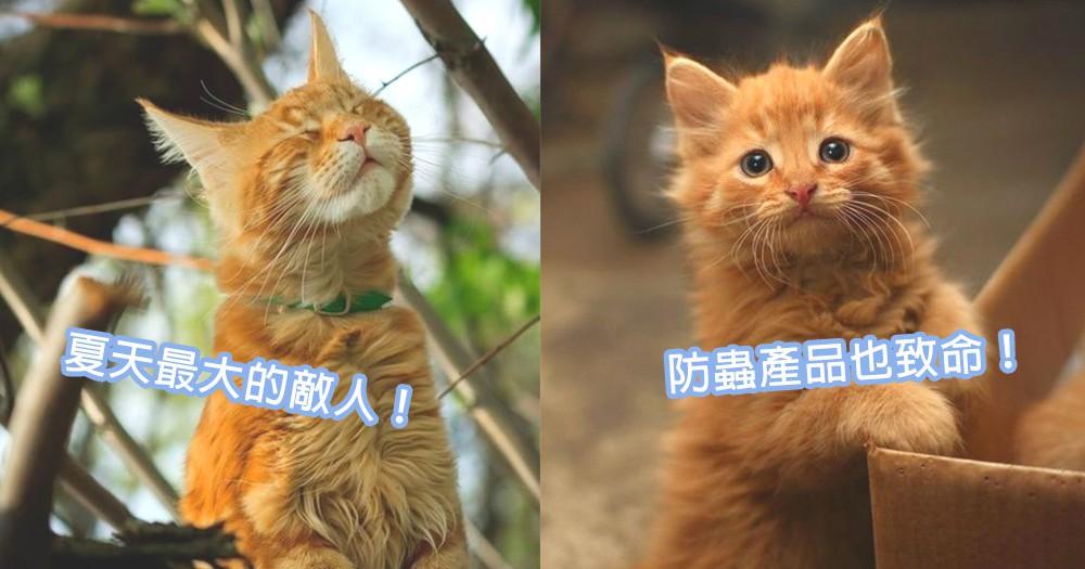 貓咪可能會致命!4款貓星人不能接觸防蚊蟲產品,居家生活中的小漏洞!