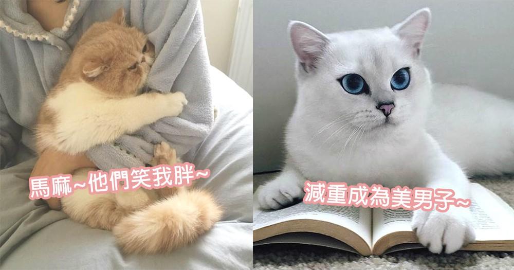 貓星人也要減重!3個步驟順利調節貓咪體重,不可以再被奴才笑朕是胖子!