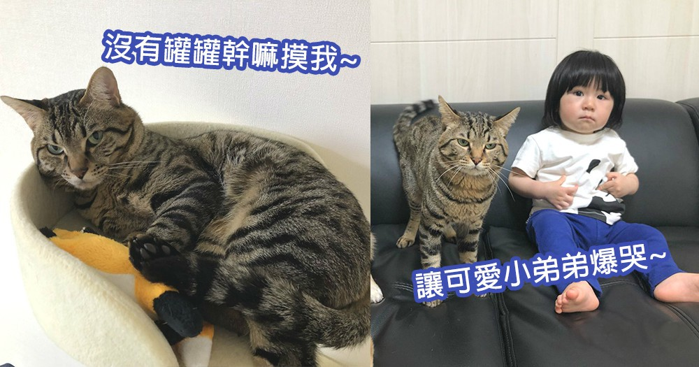 貓星人又傷地球人的心!可愛小弟弟向貓咪伸出小手展善意,卻被貓星人狠狠拒絕爆哭!