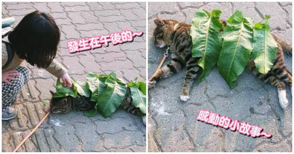 感動!小女孩用樹葉蓋住貓,原以為只是調皮,主人一問...真正理由「超暖心」!