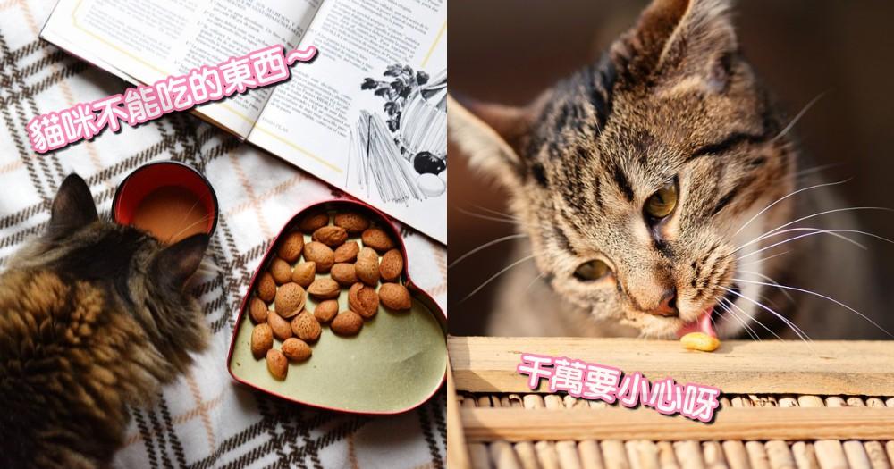 貓咪絕對不能吃!5 種 常見食物,千萬別隨便把這些放桌上呀~