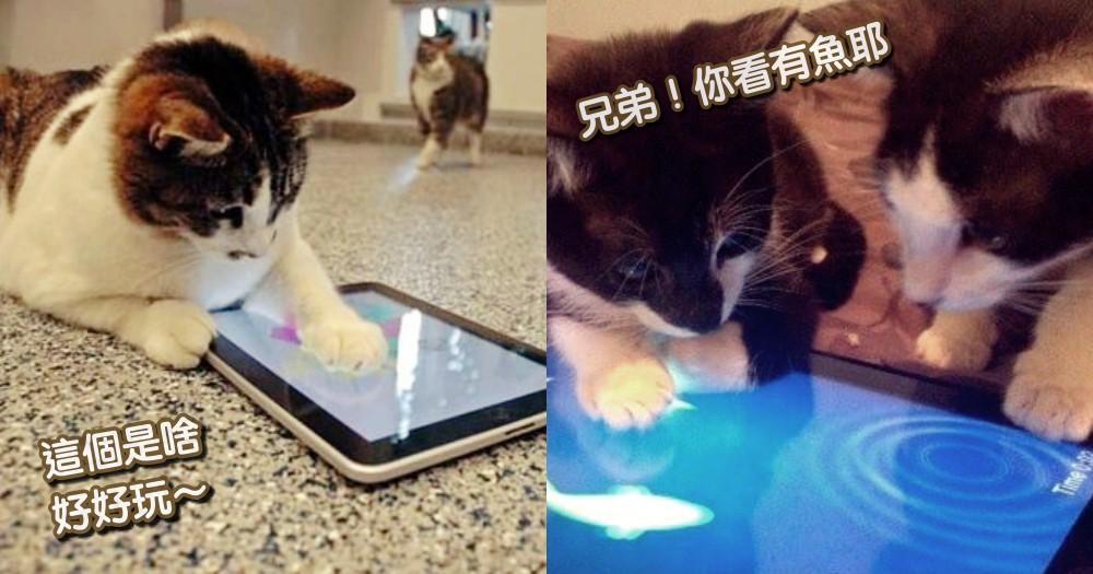 逗貓棒玩膩了?推薦 3 款「貓咪專用」app 遊戲,實測竟比主人玩的更瘋狂啊!