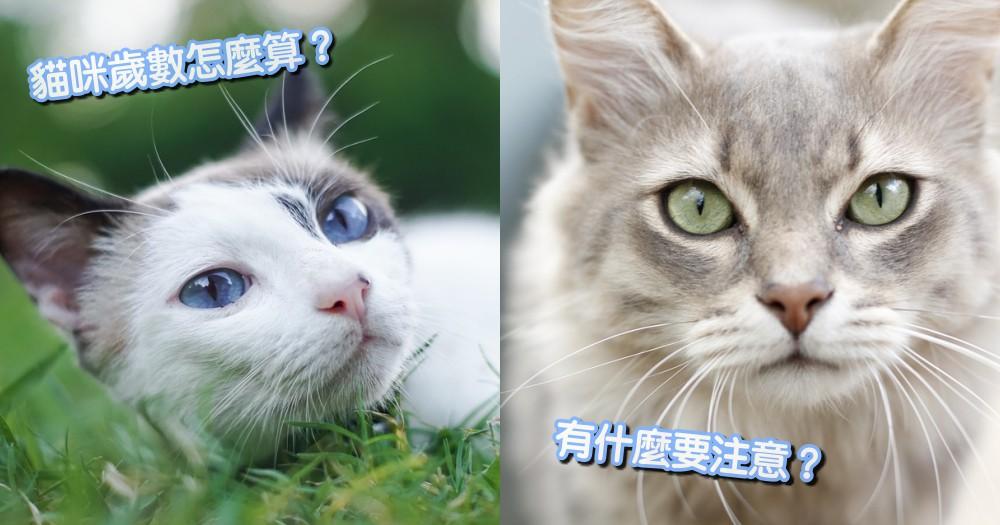 貓咪年齡這樣算!你家毛孩相當於人類幾歲?一表教你輕鬆判斷~