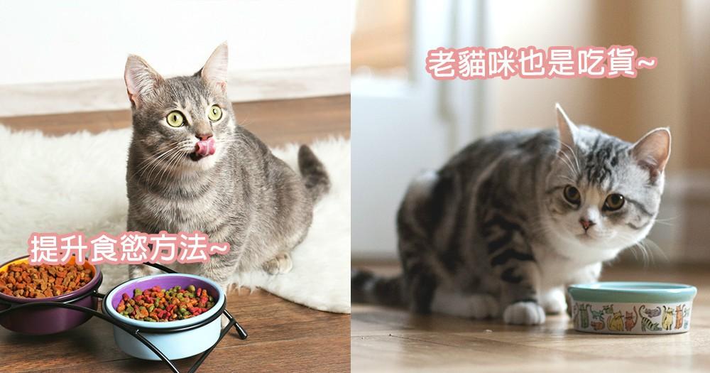 老貓咪都不愛吃飯?4種飲食方式提升老貓咪們食慾,年紀大也可以當吃貨!