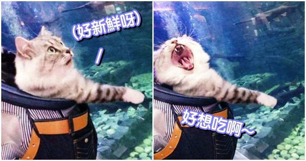 快給我魚呀!主人帶貓咪到水族館,抓不到魚瞬間的「秒崩潰臉」...網友噴笑 hen 有戲!