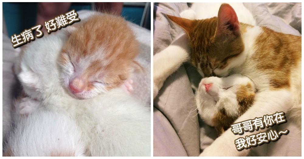 暖心故事感動萬人!被遺棄的小奶貓病危,原活不過明天...卻因「兄妹的擁抱」奇蹟存活...