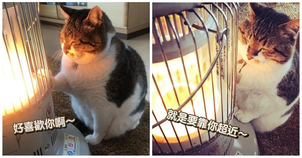 戀上暖爐的貓!深情貓咪溫柔撫摸,滿臉幸福感...網笑:你會被烤熟啦!