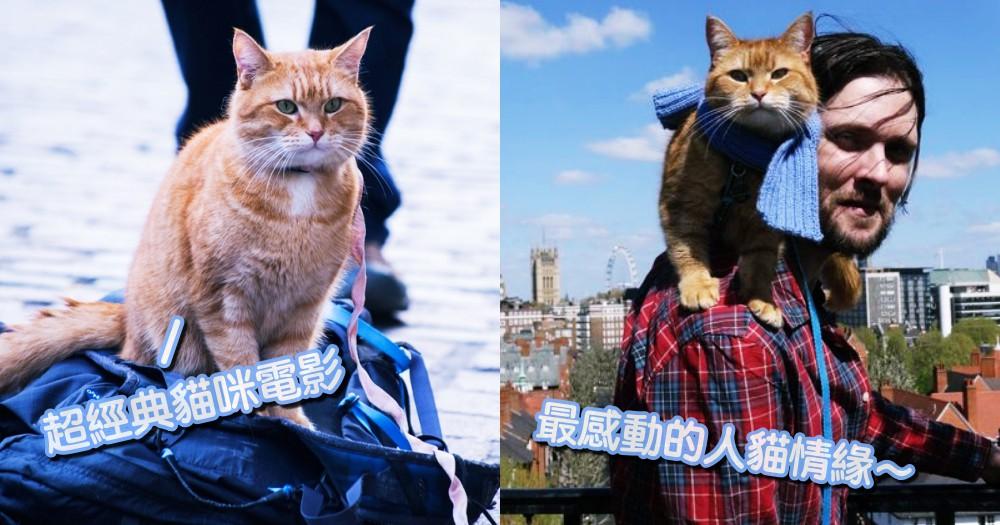 最暖心的人貓情緣!超感人電影《遇見街貓BOB》,看浪貓如何翻轉毒癮主人的一生~
