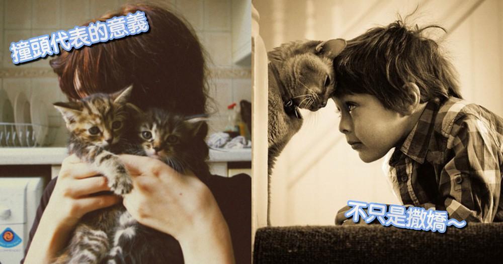 交際行為解析!為什麼貓咪會跟你撞頭?其中代表的意義「超暖心」!