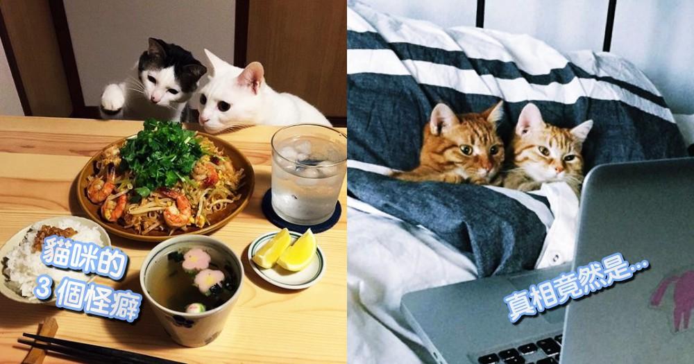 關於貓咪的 3 個怪癖!你以為貓咪這樣是愛你,其實...真相讓主人好心碎~