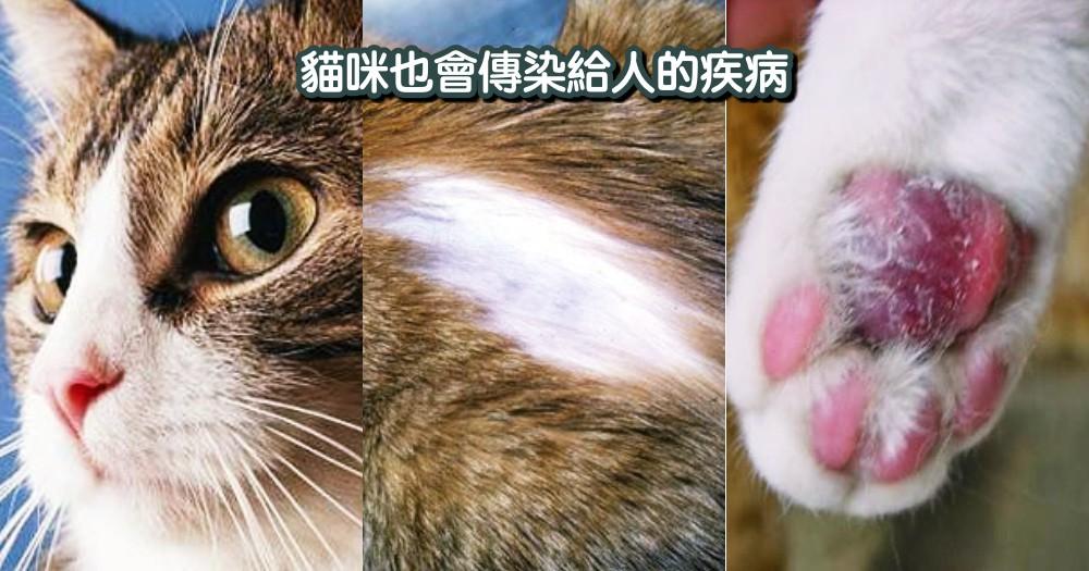 """不只貓會中獎!"""" 這個 """" 貓咪疾病也會傳染給人,奴才們要更小心防範呀~"""
