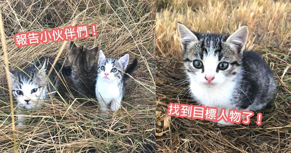 就是這個人了!網友溜狗遇上10隻被棄養可愛小奶貓,緊隨其後跟回家收編~