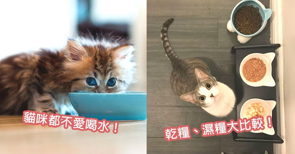 貓咪都不愛喝水!乾糧、濕糧水份比例大公開,讓貓咪們補充足夠水份~