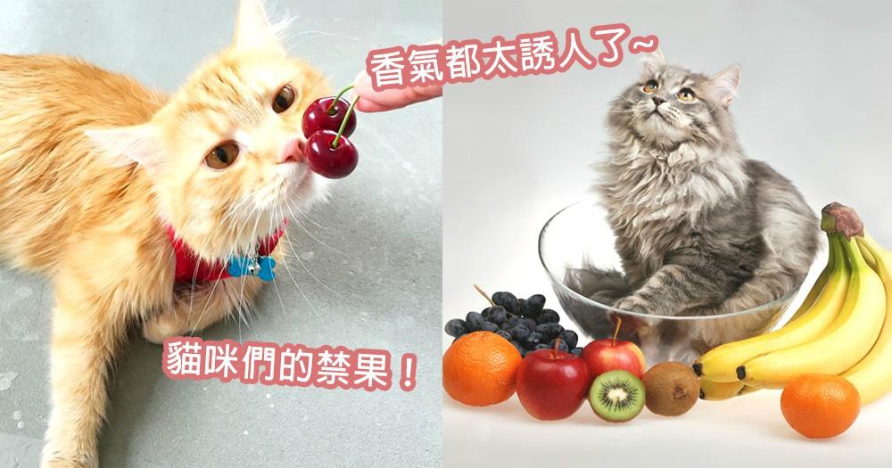 不能被貓咪聞到香氣!7款香甜卻讓貓咪致命的「貓咪禁果」,奴才們還是偷偷地躲起來吃吧~