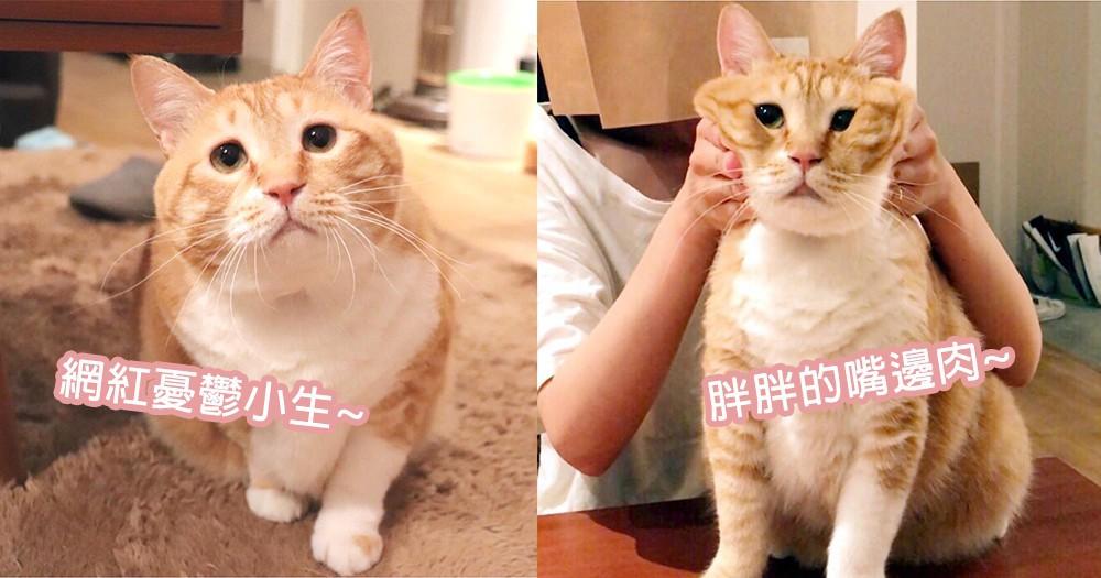 讓人都想要抱抱~胖胖憂鬱小生Gupitaro闖進貓奴心,擔心神情下的愛撒嬌個性~