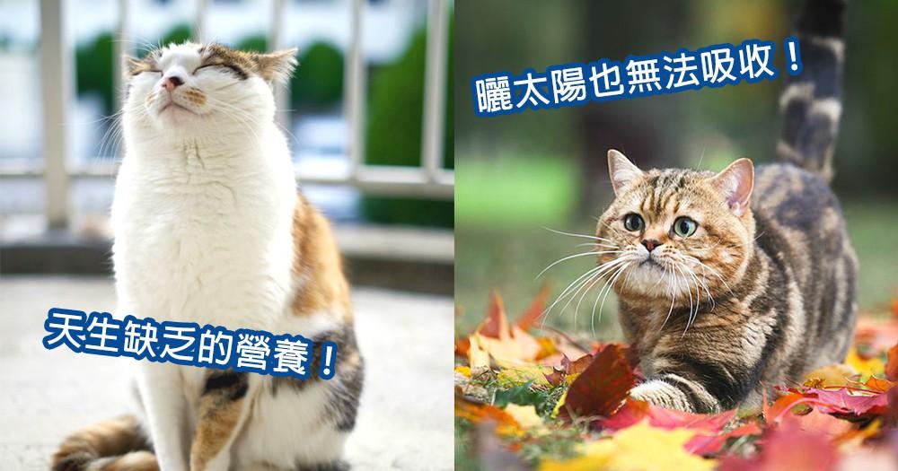 可憐的貓星人!3種貓咪天生缺乏重要營養素,下次補充營養不要忘了它們!
