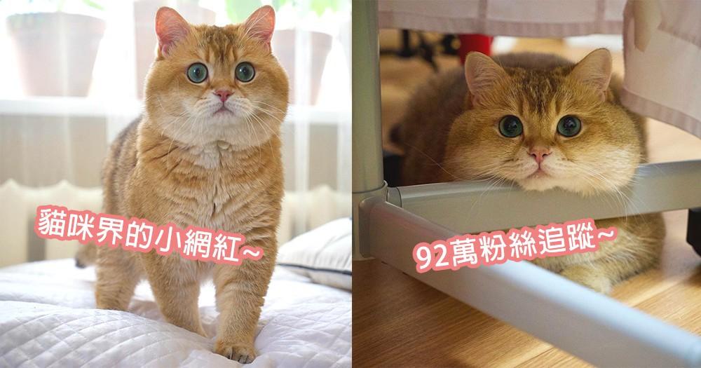 胖胖身軀+賣萌大眼睛!貓咪界的吃玩睡小網紅Hosico,讓人想要偷摸的嘴邊肉~