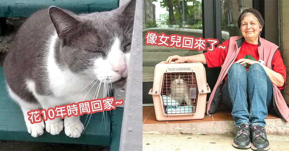 花10年時間終回家!逝世10年女兒貓咪回到自己懷抱,最讓人感動的團聚~