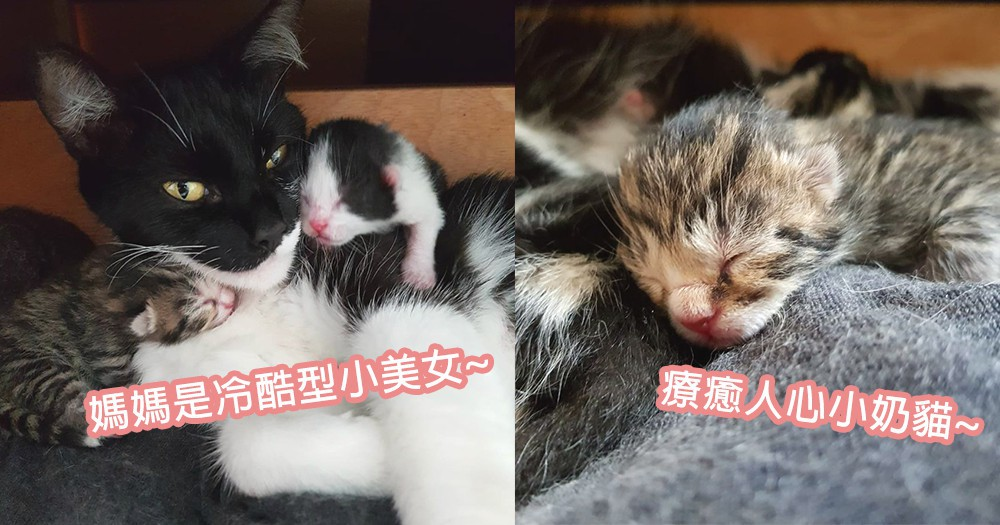 等等,我家有貓出現?網友回家驚見床下多出一堆小奶貓,不請自來地成為育嬰房了~