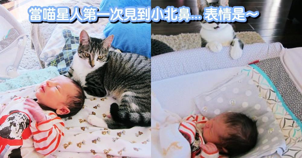 當喵星人初次見到新生寶寶~露出超有戲表情,網笑:阿里係跨丟鬼吼?