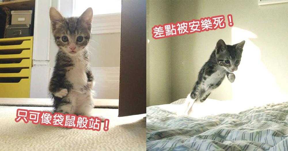 出生4週面臨安樂死!先天性身體缺陷小貓尋找幸福家庭,像小袋鼠般跳向更好貓生~
