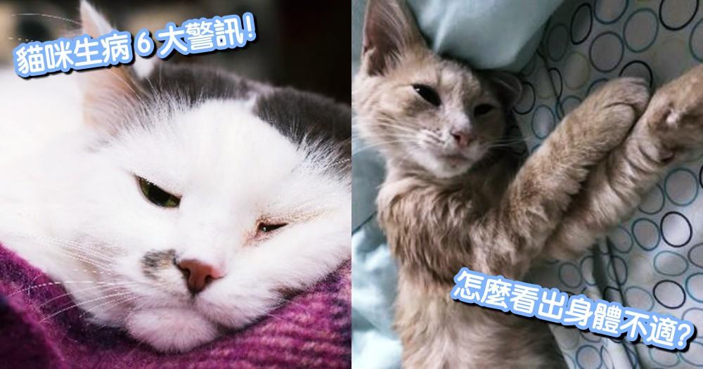 奴才要注意!要怎麼看出貓咪身體不適?貓咪生病的警訊是...首先觀察貓咪這 6 點!