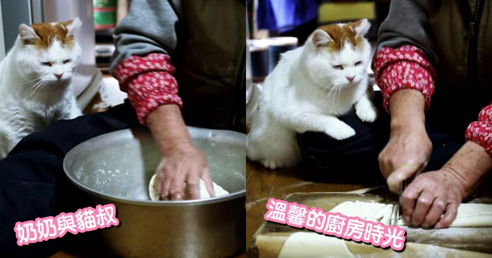 超溫馨!喵星人超愛待在日本奶奶身邊看做菜...乖巧樣超可愛!網友歪樓:是在坐等開飯