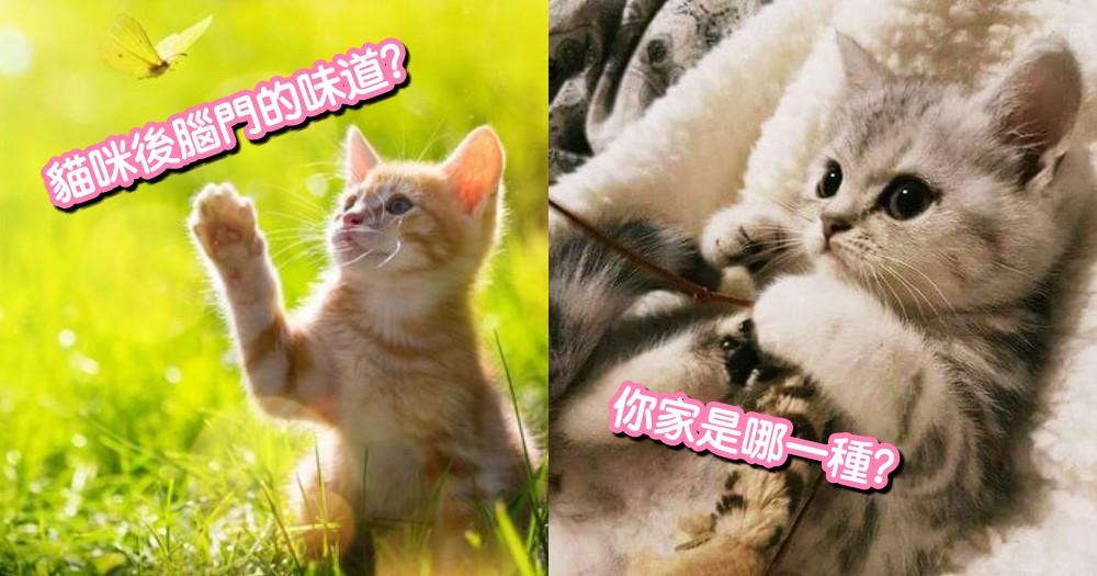 一天沒吸貓就好痛苦!網友分享自家貓咪的 6 種體香~你家貓咪是什麼味道呢?