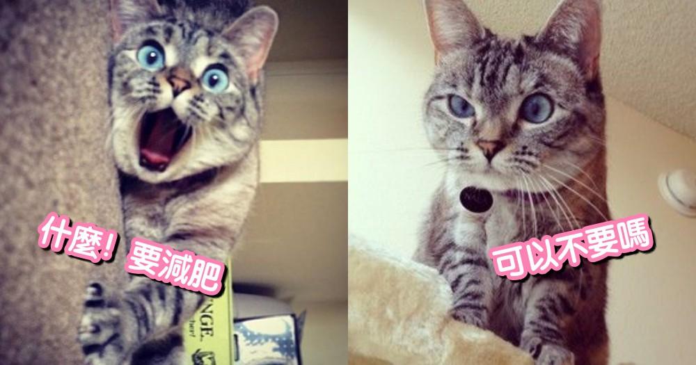 貓咪過胖怎麼辦!有效幫助貓咪消耗熱量的 6 大招,簡單瘦身有法寶!