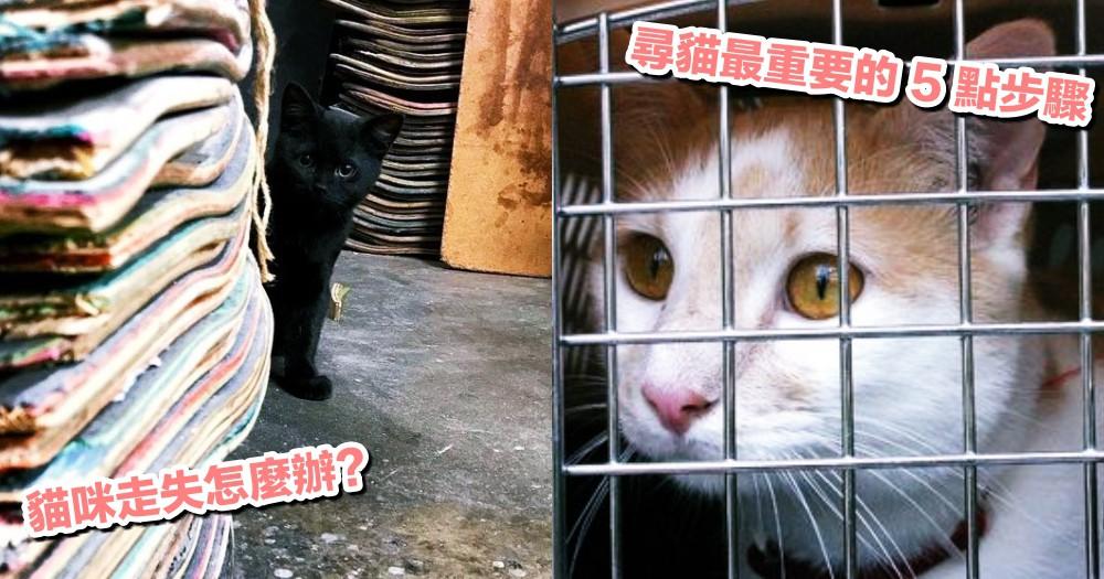 愛貓走失別慌!網友親身經歷分享,尋貓的這 5 點步驟超重要!