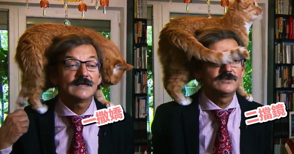 直播現場被搗蛋!波蘭學者接受訪問談政治,橘貓竟亂入『舔耳』撒嬌求關注...