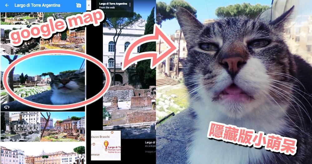 谷歌地圖驚現小萌呆!義大利街貓納涼意外入鏡,『超大特寫』呆樣全都被照到啦~
