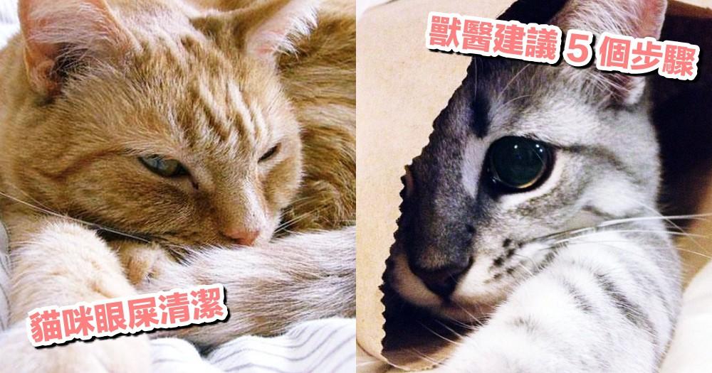 【貓咪眼屎清潔】千萬不要用手硬摳!獸醫建議清潔的 5 步驟~
