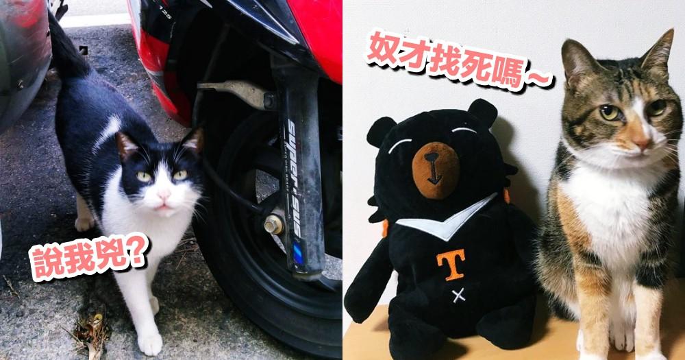【哪種花色的貓最兇】研究證實最容易『恰北北』的貓,奴才要自求多福惹QQ...