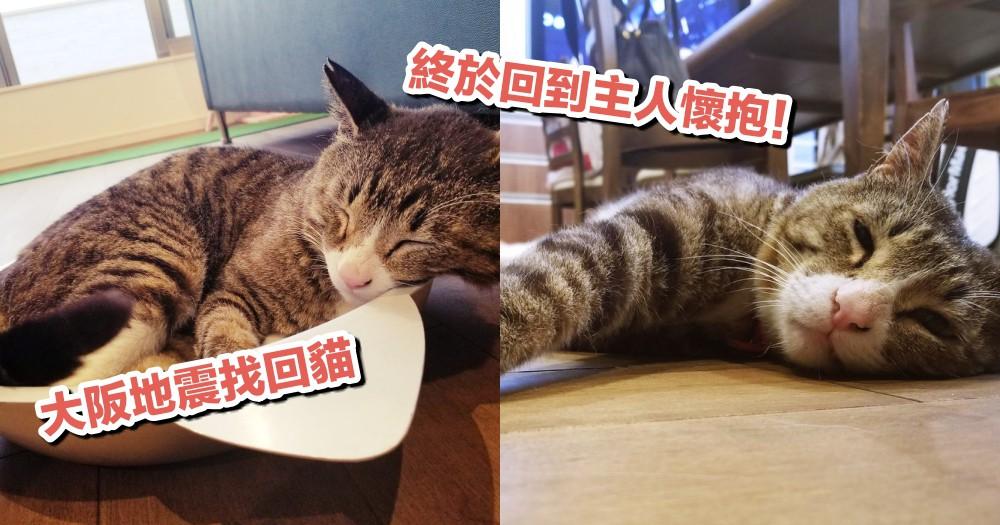 『奴才,你還好嗎!』日本推特主貓走失半年,在大阪強震時竟驚喜出現在家門口!