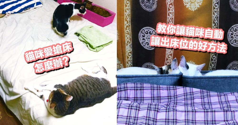 終於可以好好睡上覺!各位貓奴不用再縮床腳啦,就用這『方法』奪回被貓霸佔的床吧!