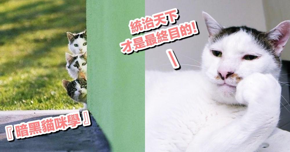 【貓咪的暗黑學】原來親密都是偽裝?你的貓其實想『暗殺』你的 9 個行為!