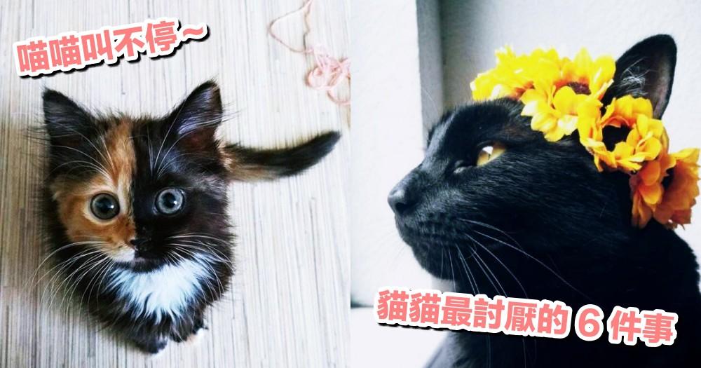 為什麼會一直喵喵叫?別不小心踩到地雷,因為貓貓最討厭這 6 件事!