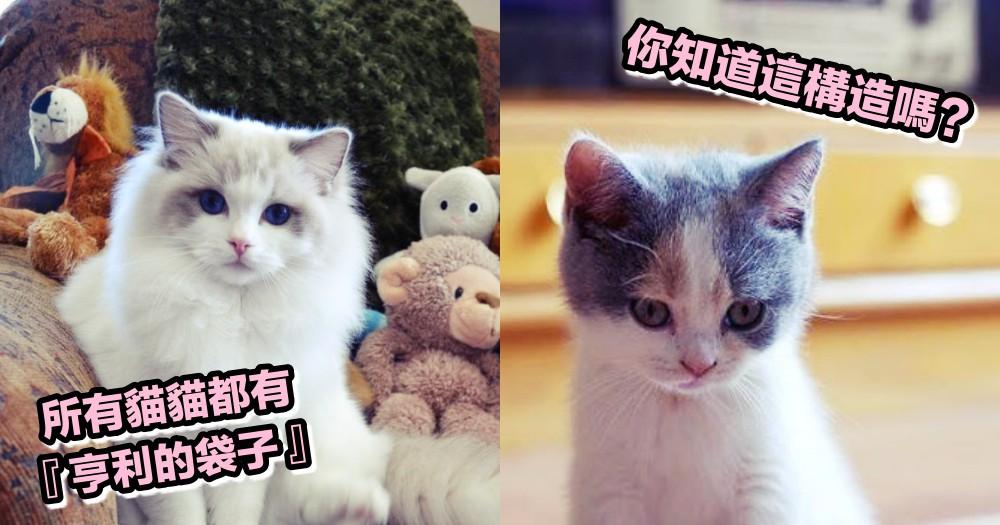 你知道 HENRY'S POCKET 嗎?在貓貓耳朵上的驚奇小袋子,各位貓奴是否有注意過~