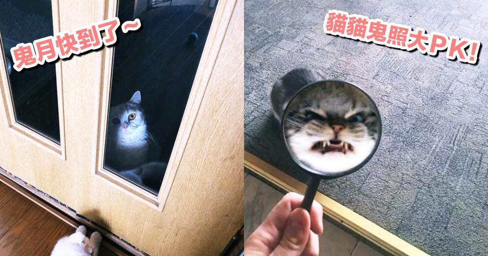 貓貓鬼照大PK!推特網友被主子各種『詭照』嚇呆,驚恐表示『這修圖還有救嗎?』