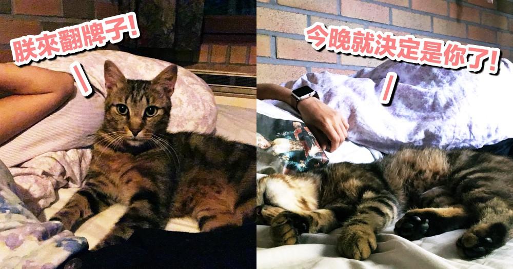 日本夫婦一覺醒來,竟多了個枕邊喵!原來是偷跑進來的浪貓~網:自願陪睡羨慕死啦~