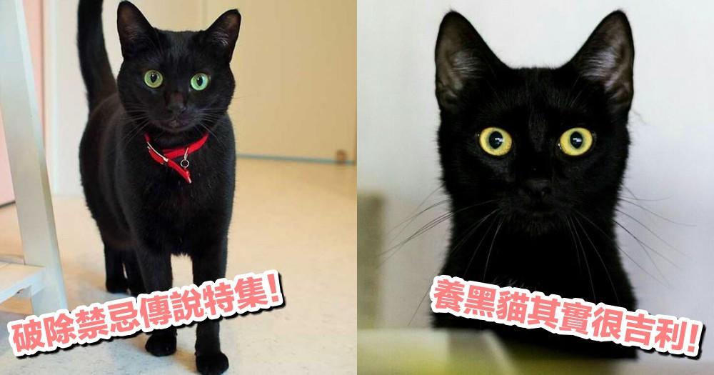【應景特集】鬼門開了!關於貓咪的民間禁忌傳說:破除 4 點對貓咪的迷思!